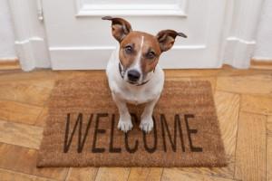 (Javier Brosch/Shutterstock.com) Hundefreundliches Hotel Lippstadt buchen