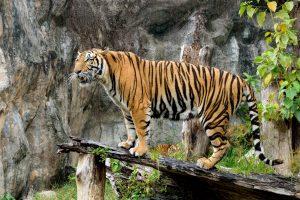 (MusiggachartSMY/Shutterstock.com) Nadermanns Tierpark in der Nähe des Hotels
