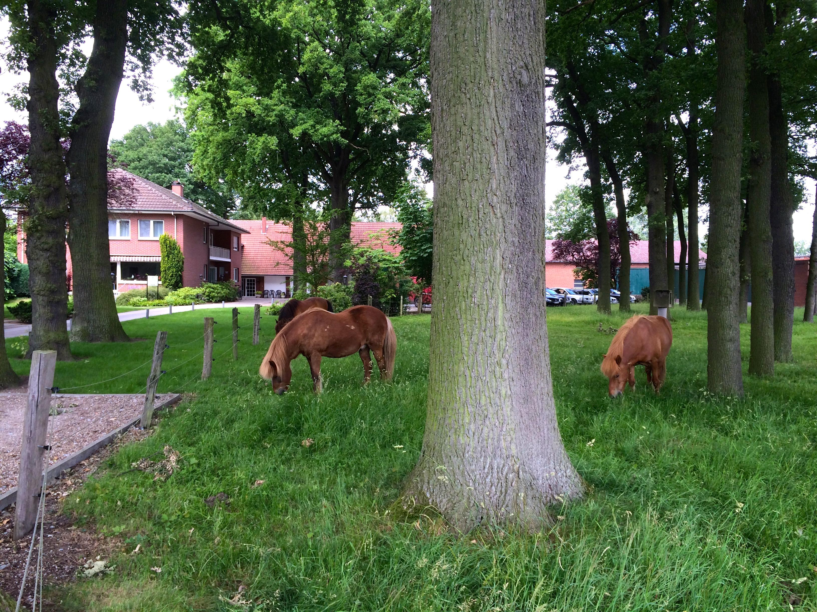 Ferien auf dem Bauernhof Pferdewiese mit Pferden Hotel