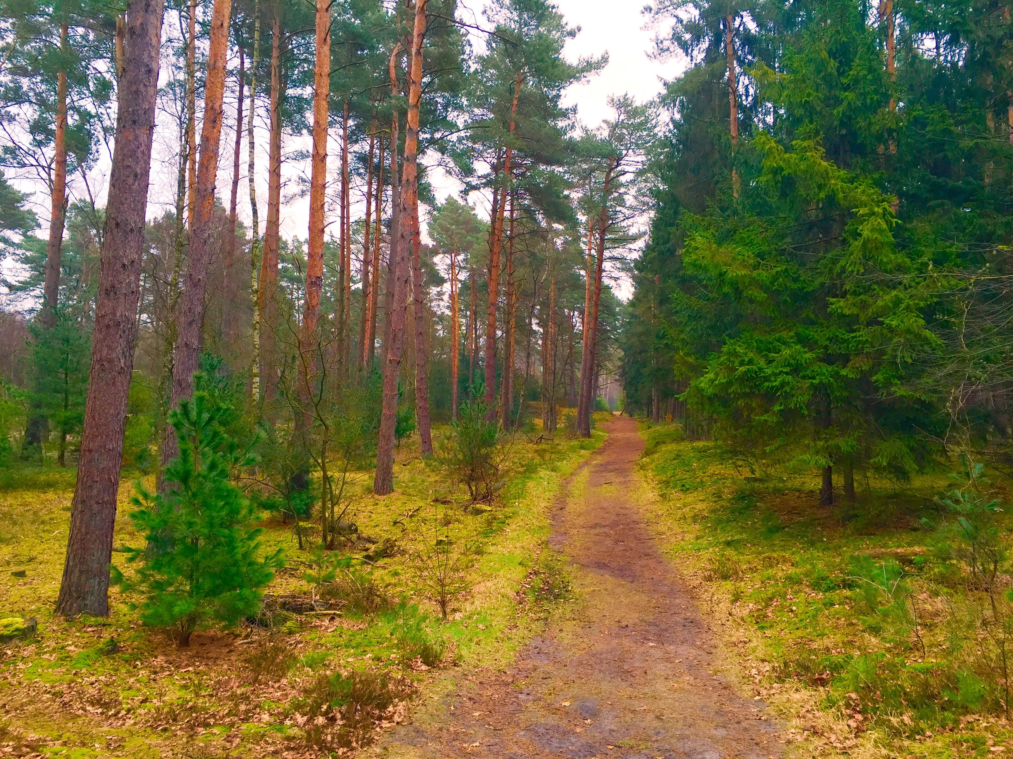 Camping in Lippstadt - Wald und Wiesen