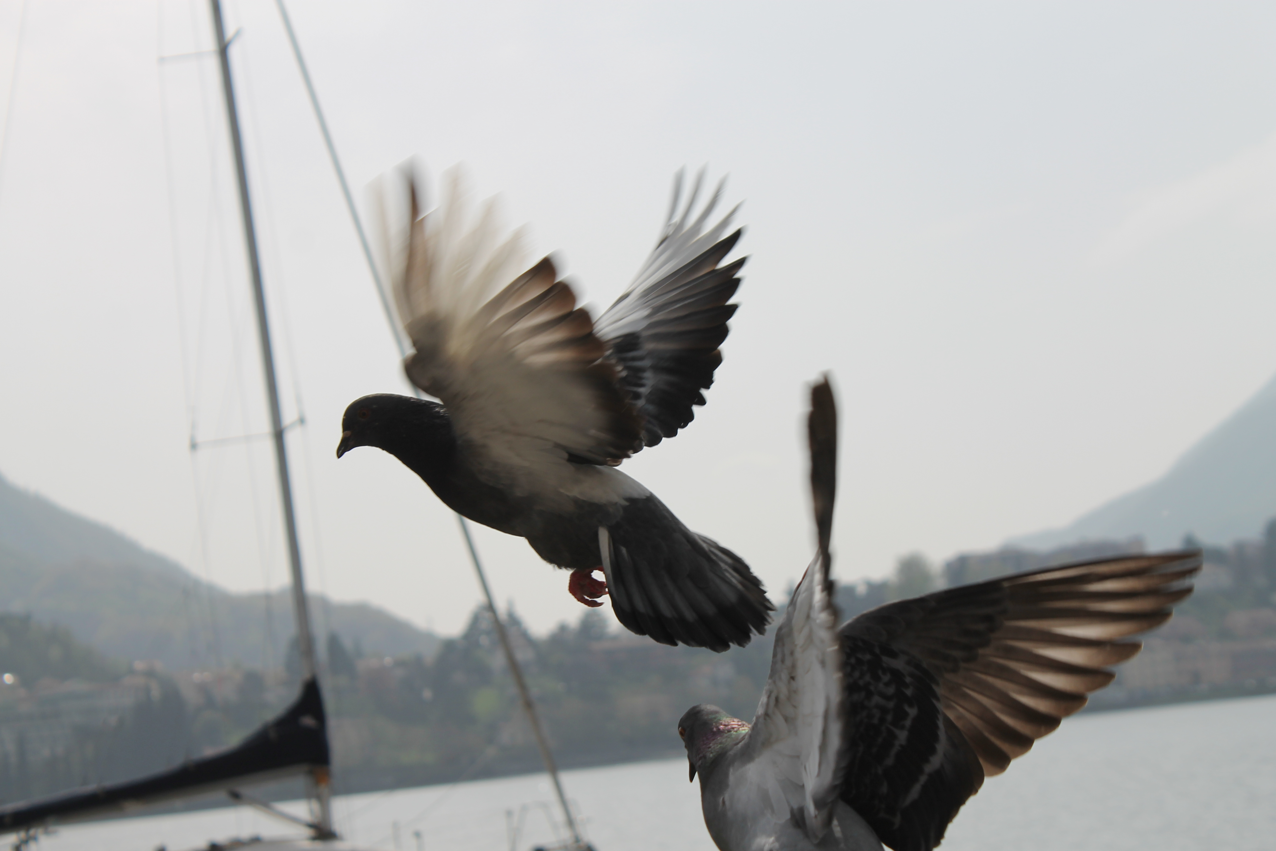 Tauben an der Möhne - Bootsfahrt - Ausflugstipp für Hotelgäste Lippstadt