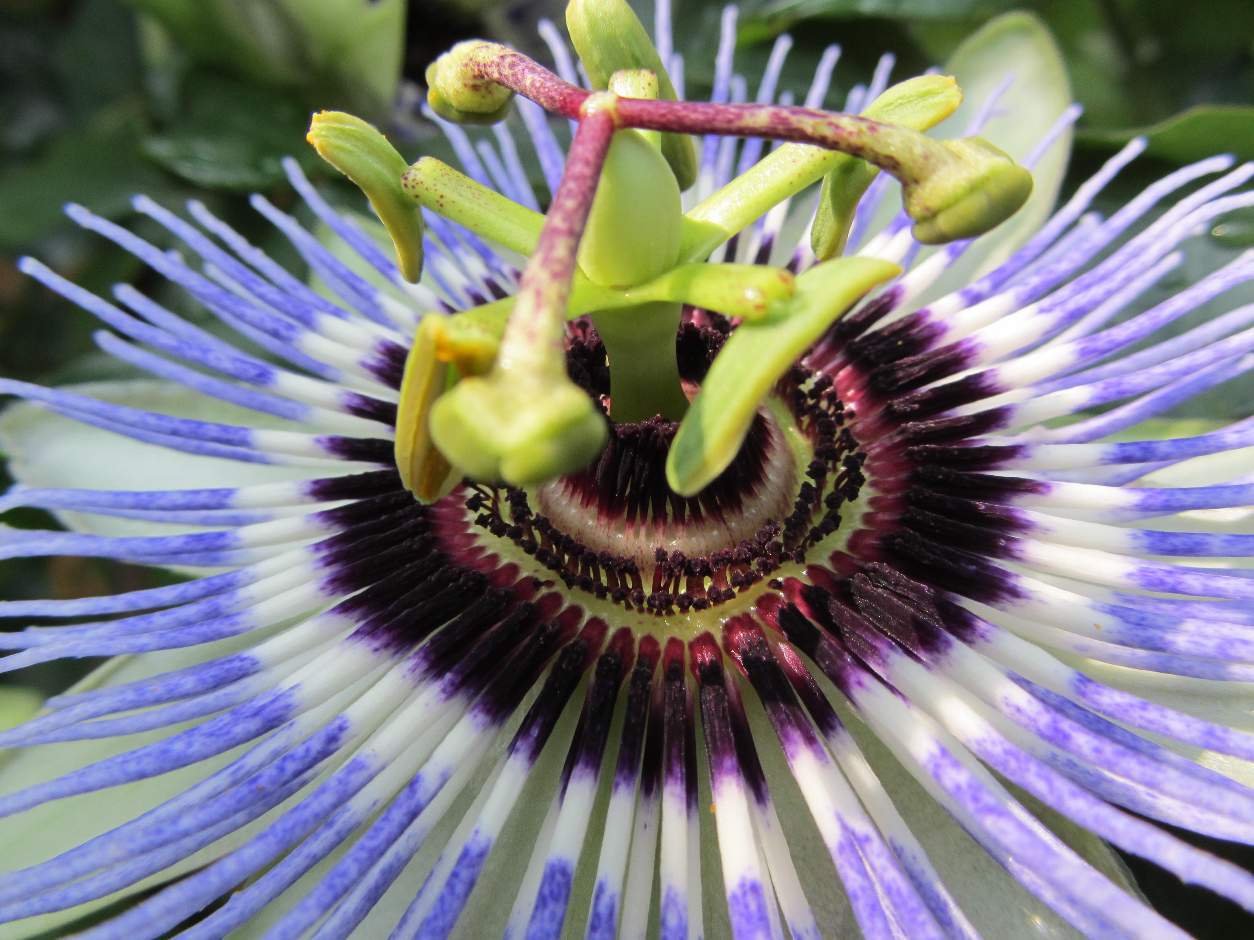 Vorteile Agentur für Zimmervermittlung Passionsblume
